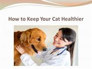 How to Keep Your Cat Healthier