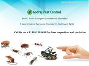 Contact Pest Control Noida | Call on 9811381458