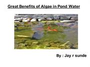 Jay r sunde | Benefits of Algae in Pond Water