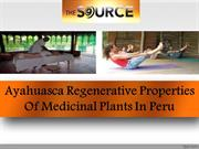 Ayahuasca Regenerative Properties Of Medicinal Plants In Peru