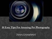 10 Easy Tips For Amazing Pet Photography