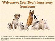 Welcome to Your Dog's home away from home