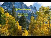 1-Nov 01-Autumn- Yellow Autumn-Autumn leaves-Andre Rieu violin-48