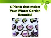 5 Plants that makes Your Winter Garden Beautiful