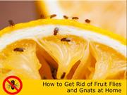 How to Get Rid of Fruit Flies and Gnats at Home