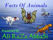 Fact of Animal