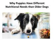 Why Puppies Have Different Nutritional Needs than Older Dogs