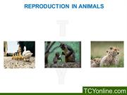 Reproduction in Animals