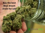 Buy the best Blue dream strain for sale