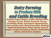 Dairy Farming to Produce Milk and Cattle Breeding