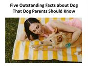 Five Outstanding Facts about Dog That Dog Parents Should Know