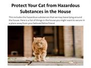 Protect Your Cat from Hazardous Substances in The House