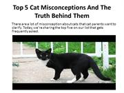 Top 5 Cat Misconceptions and the Truth Behind Them