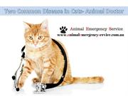 Two Common Disease in Cats- Animal Doctor