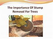 The Importance Of Stump Removal For Trees