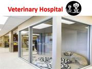 Top Animal Hospital Near You-Veterinary Hospital