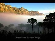 1-Dec 19-Autumn Forest Fog-Autumn Evening-LeVanKhoa