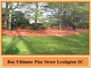 Best Provider Lawn Maintenance Lexington SC