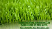 4 Natural Ways to Improve the Appearance of Your Lawn
