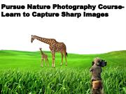 Nature Photography Course| macro photography course