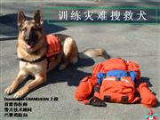 Training of the search and rescue dog