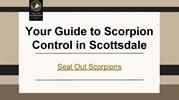 Your Guide to Scorpion Control in Scottsdale