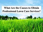 What Are the Causes to Obtain Professional Lawn Care Services