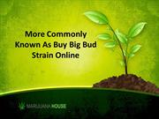 More commonly known as buy big bud strain