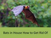 Bats in House How to Get Rid of