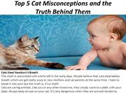 Top 5 Cat Misconceptions and the Truth Behind