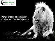 Wildlife photography course| nature photography course