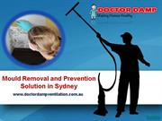 Mould Removal and Prevention Solution in Sydney