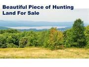 Beautiful Piece of Hunting Land For Sale