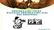 Photography Tours - Wildlife Photography Tips For Beginners