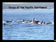 Orcas of the Pacific Northwest