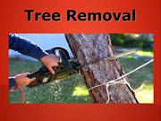Tree Removal Service in