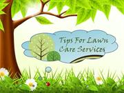Tips For Lawn Care Services