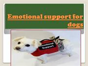 Emotional support for dogs