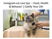 Cat Care tips for Cat lovers
