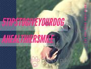 5 Tips To Give Your Dog A Healthier Smile