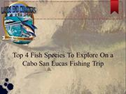 Top 4 Fish Species To Explore On a Cabo San Lucas Fishing Trip