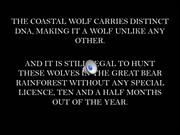 Introduction into the brand, Coastal Wolf