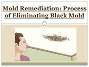 Mold Remediation - Process of Eliminating Black Mold