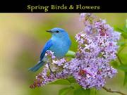 1-Mar 23-Spring Birds and Flowers-Romance anonyme-Andre Rieu