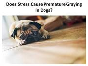 Does Stress Cause Premature Graying in Dogs?
