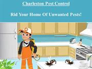 Charleston Pest Control- Rid Your Home Of Unwanted Pests!