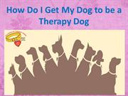 How Do I Get My Dog to be a Therapy Dog