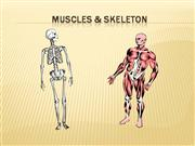 Muscles & Skeleton (not completed)