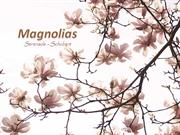 1-Apr 19-Spring Flowers-Magnolias-1