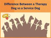 Difference Between a Therapy Dog vs a Service Dog